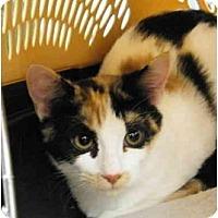 Adopt A Pet :: Joany - Modesto, CA