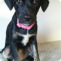 Adopt A Pet :: Terrific Trudy - Brooklyn, NY