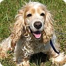 Adopt A Pet :: ABBOTT-FOSTER NEEDED