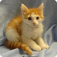 Adopt A Pet :: Sammy - Bentonville, AR