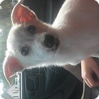Adopt A Pet :: Petey - Leming, TX