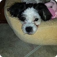 Adopt A Pet :: Izzy - Jacksonville, FL