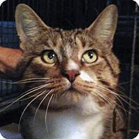 Adopt A Pet :: Tyler - Lombard, IL