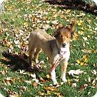Adopt A Pet :: Minnie Pearl