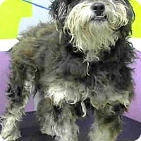 Adopt A Pet :: Jersey-Adoption Pending - Boulder, CO