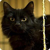 Adopt A Pet :: Popo - Staten Island, NY