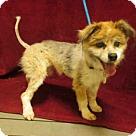 Adopt A Pet :: *SKYLAR