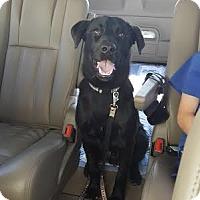 Adopt A Pet :: Bagherra - Cumming, GA