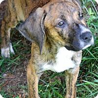 Adopt A Pet :: Carl - Albemarle, NC