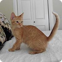 Adopt A Pet :: Buster - Roanoke, VA
