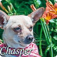 Adopt A Pet :: Chasper - Hamilton, MT
