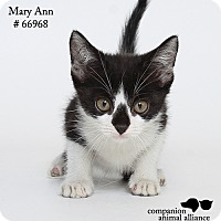 Adopt A Pet :: Mary Ann (Foster) - Baton Rouge, LA