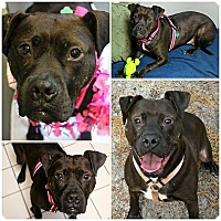 Adopt A Pet :: Mazie - Forked River, NJ