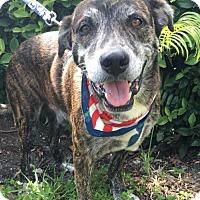 Adopt A Pet :: CHUCK - Fort Pierce, FL