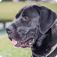 Adopt A Pet :: Tyson - Loxahatchee, FL