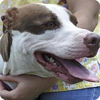 Adopt A Pet :: Dottie - Potsdam, NY