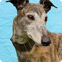 Adopt A Pet :: Charm - Seattle, WA