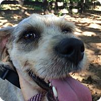 Adopt A Pet :: Buddy - Ball Ground, GA