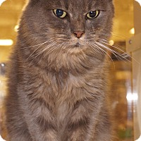 Adopt A Pet :: Cinnamon - Salem, NH