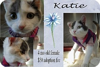 Calico Kitten for adoption in Jefferson City, Tennessee - Katie