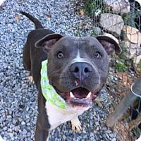 Adopt A Pet :: Julian - Greensboro, NC