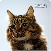 Adopt A Pet :: Nigel - Edwardsville, IL