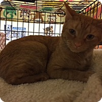 Adopt A Pet :: Biscuit - Blasdell, NY