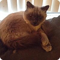 Adopt A Pet :: Otis - Sacramento, CA