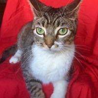 Adopt A Pet :: APRIL - Corona, CA