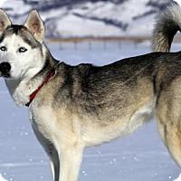 Adopt A Pet :: Sky - Winter Park, CO