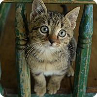 Adopt A Pet :: Wally - San Antonio, TX