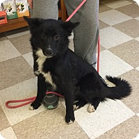 Adopt A Pet :: Jake - Kingman, KS