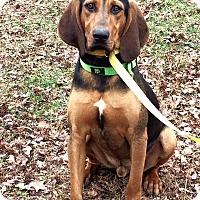Adopt A Pet :: Gus - GREENLAWN, NY