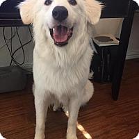 Adopt A Pet :: Manny - Garland, TX