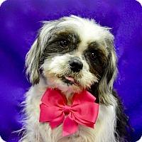 Adopt A Pet :: Zsa Zsa - Irvine, CA