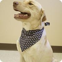 Adopt A Pet :: Buddy - Laredo, TX