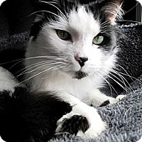Adopt A Pet :: Patches - Nolensville, TN