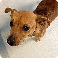 Adopt A Pet :: Hilary - Muskegon, MI
