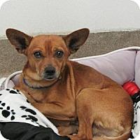 Adopt A Pet :: Delbert - Gilbert, AZ