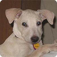 Adopt A Pet :: Sandy - Golden Valley, AZ