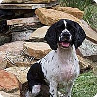 Adopt A Pet :: Kelsey - Sugarland, TX