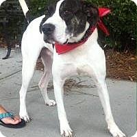 Adopt A Pet :: Texas - Mount Pleasant, SC