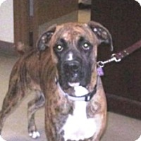 Adopt A Pet :: Duke-Adopted! - Turnersville, NJ