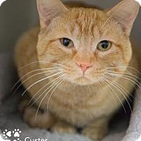 Adopt A Pet :: Custer - Merrifield, VA