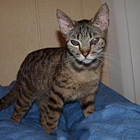 Adopt A Pet :: Bogart - Jackson, MS