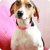 Adopt A Pet :: Stacie - Waldorf, MD