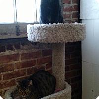 Adopt A Pet :: Taipan - Wakinsville, GA