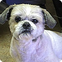 Adopt A Pet :: ALFONZO - Hurricane, UT