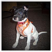 Adopt A Pet :: MELLIE - Medford, WI