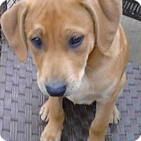 Adopt A Pet :: Avocado - Enfield, CT